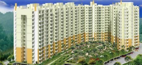 1150 sqft, 2 bhk Apartment in Terra Elegance Sector 33 Bhiwadi, Bhiwadi at Rs. 21.0000 Lacs