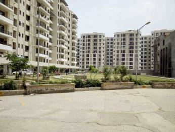 1510 sqft, 3 bhk Apartment in SBP Homes Sector 126 Mohali, Mohali at Rs. 36.9000 Lacs