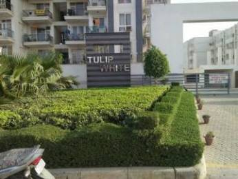 1326 sqft, 3 bhk Apartment in Tulip White Sector 69, Gurgaon at Rs. 21000