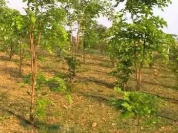 1197 sqft, Plot in Builder nature green money Choutuppal, Hyderabad at Rs. 4.0000 Lacs
