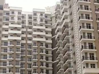 1325 sqft, 3 bhk Apartment in JM Aroma Sector 75, Noida at Rs. 67.0000 Lacs