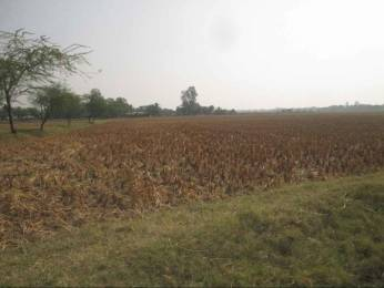 20000 sqft, Plot in Builder BHIMPURA PLOT Balasore Bhadrak Cuttack Road, Balasore at Rs. 25.0000 Lacs