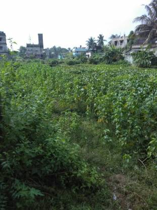 2000 sqft, Plot in Builder BAMPADA PLOT Balasore, Balasore at Rs. 8.0000 Lacs