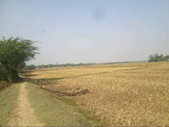 2178 sqft, Plot in Builder Banaparia Ploting Project Balasore, Balasore at Rs. 5.0000 Lacs