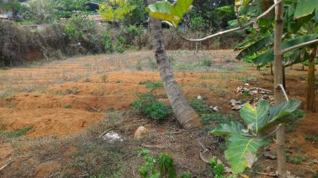 17424 sqft, Plot in Builder Residential Land for Sale Kodakara Kodungallur Highway, Thrissur at Rs. 64.0000 Lacs