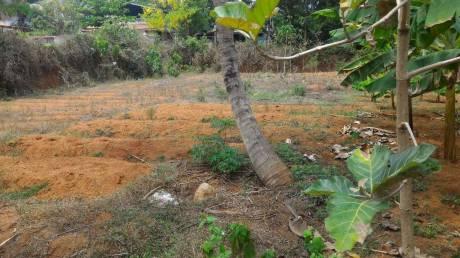 17424 sqft, Plot in Builder Residential Land for Sale Kodakara Kodungallur Highway, Thrissur at Rs. 64.0000 Lacs