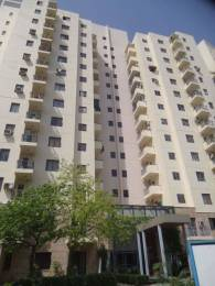 1326 sqft, 3 bhk Apartment in Tulip White Sector 69, Gurgaon at Rs. 19000