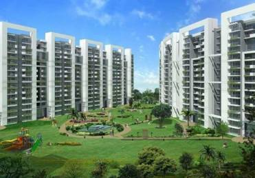 2010 sqft, 4 bhk Apartment in Tulip Violet Sector 69, Gurgaon at Rs. 1.2000 Cr