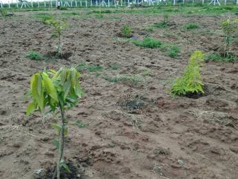 2745 sqft, Plot in Builder VARDHAN DEVELOPERS GO GREEN FARM LANDS Nedunur, Hyderabad at Rs. 6.0000 Lacs