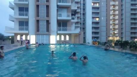 1300 sqft, 2 bhk Apartment in Puri Pratham Sector 84, Faridabad at Rs. 13000