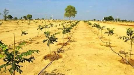 1800 sqft, Plot in Builder Project Shadnagar, Hyderabad at Rs. 20.0000 Lacs
