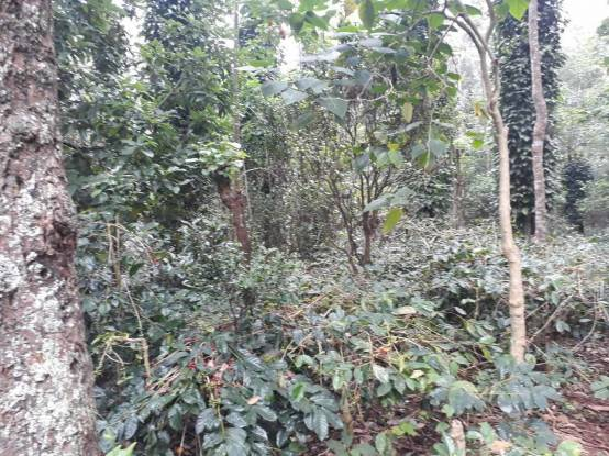 43560 sqft, Plot in Builder Project Yercaud, Salem at Rs. 1.5000 Cr