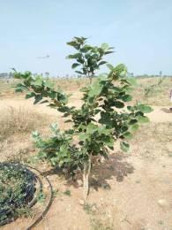 1197 sqft, Plot in Builder Divyasri realters nature green money Choutuppal, Hyderabad at Rs. 3.3333 Lacs
