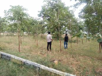 1080 sqft, Plot in Builder 120 SQ YDS PLOT WITH 5YEARS OLD RED SANDALWOOD PLANTS Bhuvangiri Hyderabad Hyderabad Warangal Highway, Hyderabad at Rs. 4.8000 Lacs