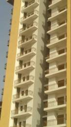 1350 sqft, 3 bhk Apartment in Victory Amara Sector 16 Noida Extension, Greater Noida at Rs. 41.5000 Lacs