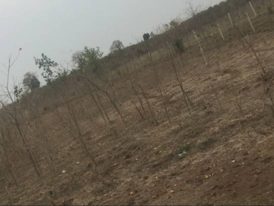 1453 sqft, Plot in Builder Project New Collectorate Road, Gwalior at Rs. 44.0000 Lacs