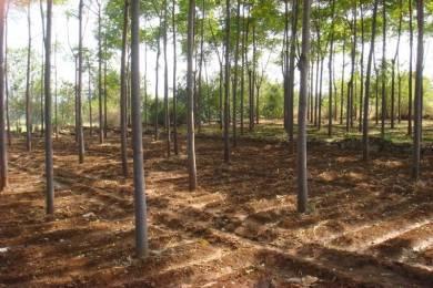 5445 sqft, Plot in Builder green walk farmlands patancheru Patancheru, Hyderabad at Rs. 8.0000 Lacs