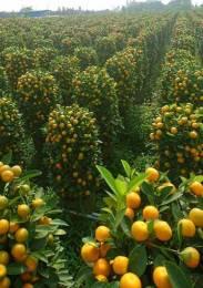 10800 sqft, Plot in Builder green walk patancheru Patancheru, Hyderabad at Rs. 15.0000 Lacs
