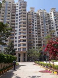 2262 sqft, 3 bhk Apartment in Godrej Frontier Sector 80, Gurgaon at Rs. 24000