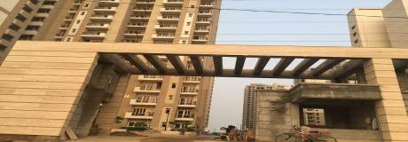 506 sqft, 1 bhk Apartment in Nimbus The Golden Palms Sector 168, Noida at Rs. 36.0000 Lacs