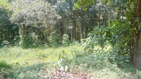 6532 sqft, Plot in Builder Project Eravankara, Alappuzha at Rs. 65.0000 Lacs